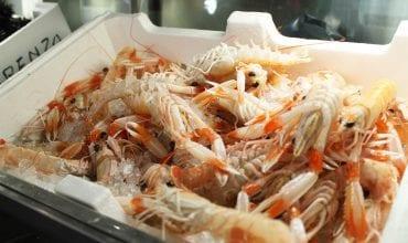 Il pesce crudo del ristorante Il Sanlorenzo
