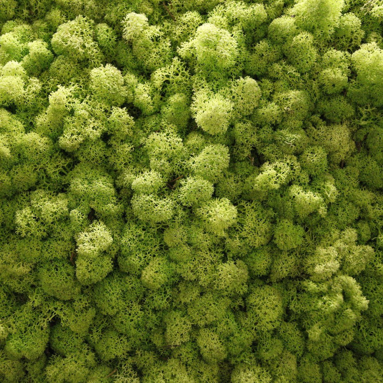 Concept store moss