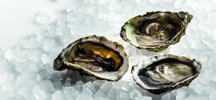 oyster pebble ice